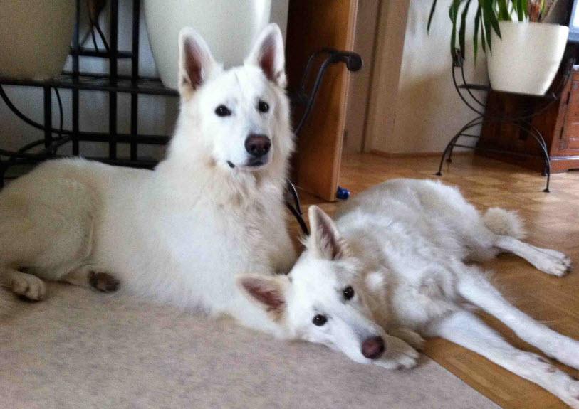 Mental Dog World - das etwas andere Hundetraining, Verhaltens- und Erziehungsberatung für Hunde, Hunde- und Mentaltraining, Energetische Unterstützungsarbeit